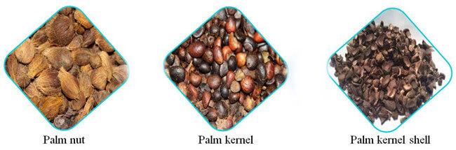 palm kernel shelling