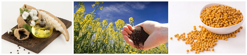 cotton seeds, soybeans, rapeseeds for softening process to make oil